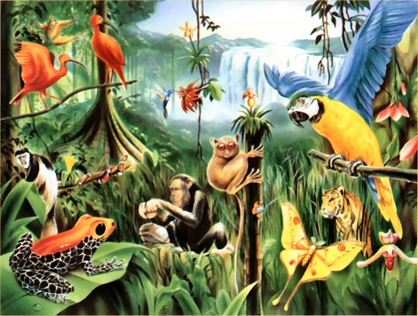 Image result for rainforest with animals